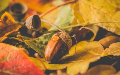Efterårsferie
